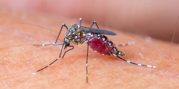Chikungunya Epidemic Is Officially Over Says Dominica Ministry of Health