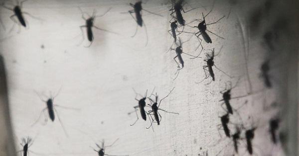 Puerto Rico First Zika Virus Death